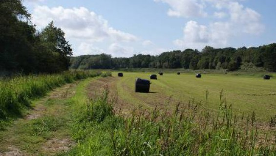 3 km - Wandeling Middenduin / Hoge Duin (blauwe route)
