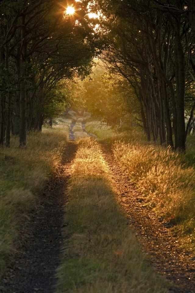 Tip van de boswachte activiteit