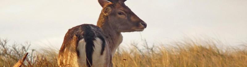 Herten spotten op herfstochtendwandeling