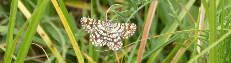 IVN - Vlinders in Middenduin