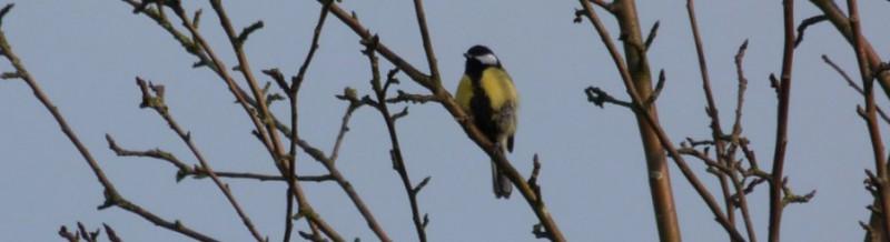 Geannuleerd: IVN - Vogelexcursie buitenplaats Elswout