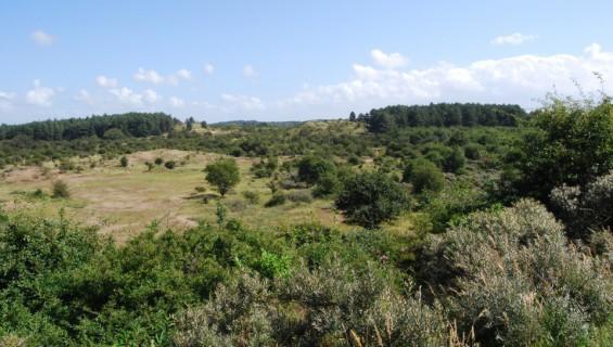 3,5 km - Kennemerduinen (groen)