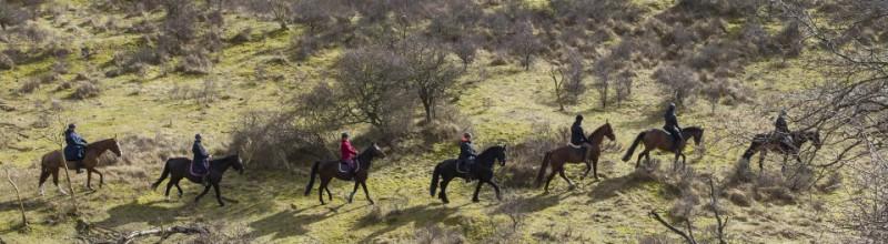 Exclusieve ruitersafari door wisentgebied in Nationaal Park Zuid-Kennemerland