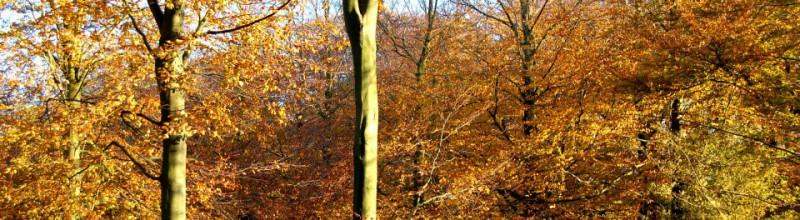 Loslaten in de natuur: coaching in het bos