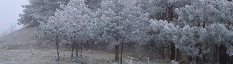 Blote bomen door het oog van de kunstenaar