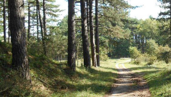 6 of 8 km - Wandeling 'Thijssebosjes'