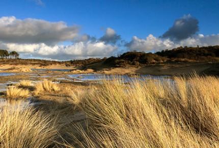 Dune valleys and dune pastures