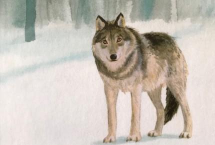 Blog: Silas en de wolf