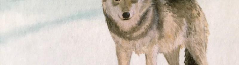 geannuleerd Kruip in de huid van de wolf