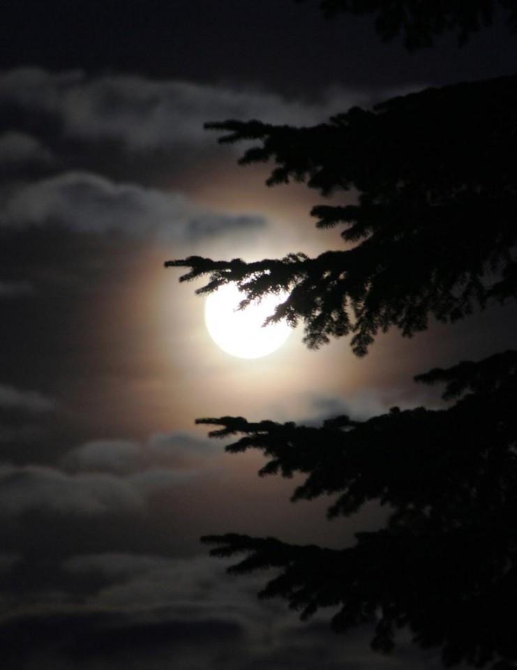 Foto van Volle maan wandeling