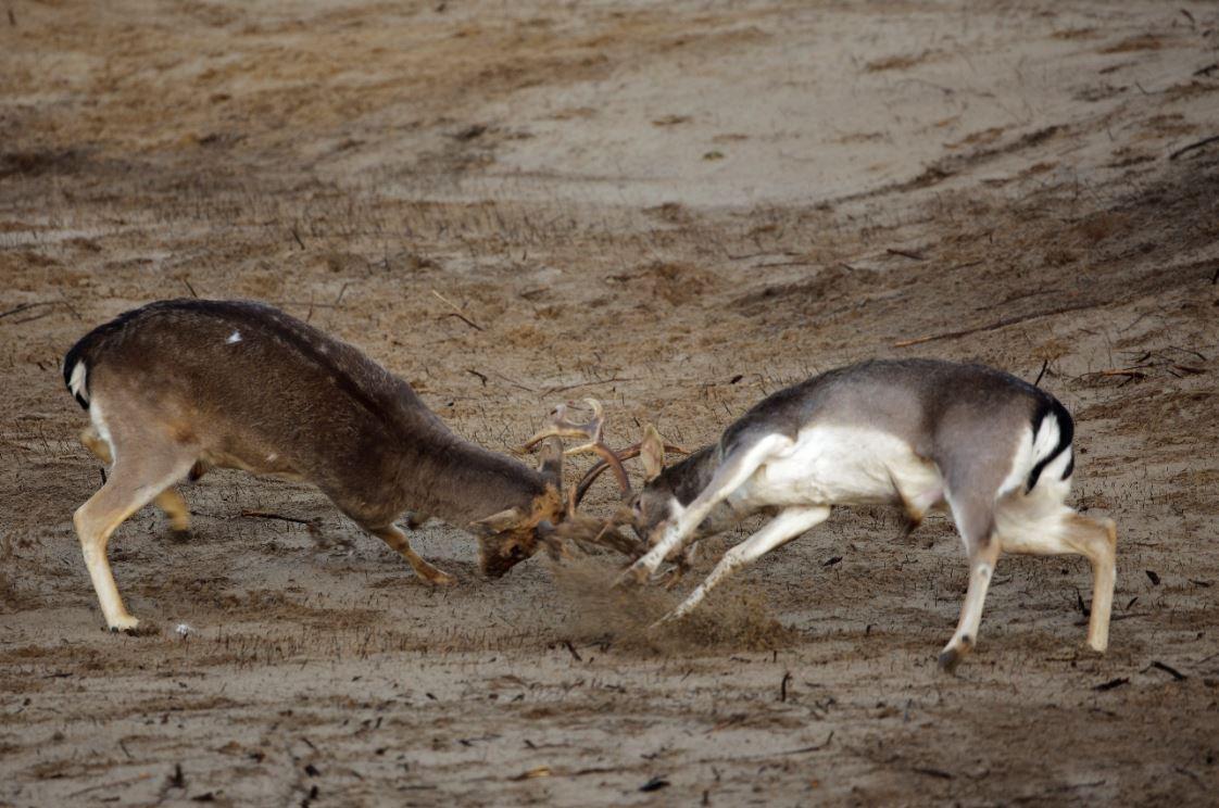 Foto van Dierenmanieren, excursie in de duinen