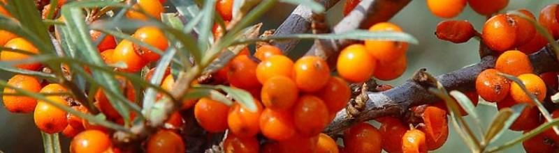 Superfoods uit het bos - zomer
