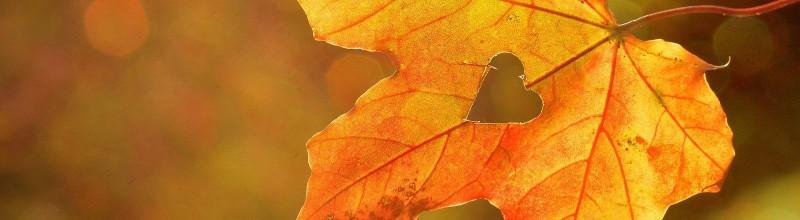 'Vier de herfst' zintuigenwandeling bij zonsopkomst