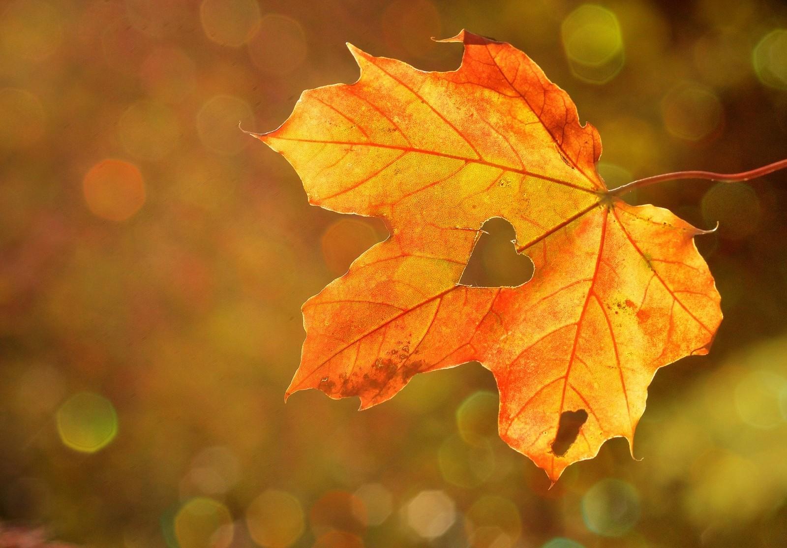 Foto van 'Vier de herfst' zintuigenwandeling bij zonsopkomst