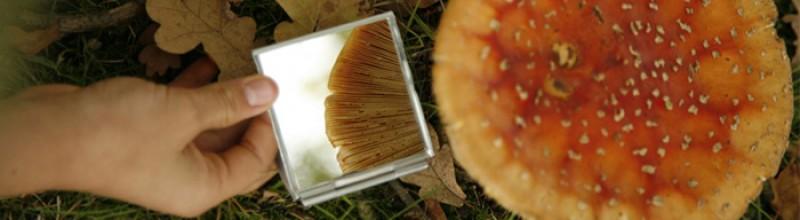 Kinder-paddenstoelendag